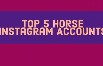 Top 5 Horse Instagram Accounts